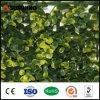 Recinti artificiali della barriera dell'EDERA degli arbusti