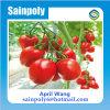 La mini serre chaude de jardin la meilleur marché pour la tomate
