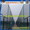 PVC Coated Chain Link Fence (DiamantMaschendraht)