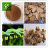 Rhizoma Polygonatiのエキス、シベリアのSolomonsealの根茎のエキス