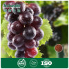Germen de la uva de Naturalin/extracto de la piel