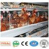 고품질 유형 층 닭 감금소