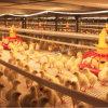 Strumentazione automatica del pollame nella Camera di pollo con la struttura d'acciaio prefabbricata