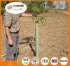 Protetor da planta dos PP/protetores ao ar livre da árvore