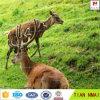 Rete fissa animale della forte rete fissa ad alta resistenza dei cervi per protezione