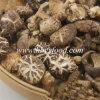Самые лучшие продавая продукты, натуральные продукты, здоровая еда, высушенный гриб Shiitake цветка чая