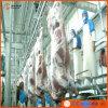 교대 가축 Halal Slaughtering 장비 교도관 프로젝트 당 100 헤드