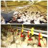 آليّة دجاجة مغذّ وشوائب