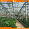 Cucumber Tomatoesのための高いYield Glass Greenhouse