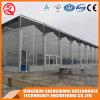 Multi-Überspannung rostfreier Stahl-Aluminiumprofil-Polycarbonat-Blatt-Gewächshaus für Blume