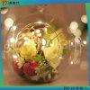 Luz decorativa colorida do diodo emissor de luz da decoração interna & ao ar livre do feriado do Natal
