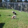 De Omheining van de Bouw van China/Tijdelijke Kennel Fence/Dog