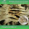 100% 자연적인 Maitake 버섯 추출 (7: 1:30% Polysaccharides)