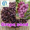 Petróleo comestível do Grapeseed da semente da uva da pureza natural e elevada
