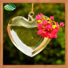 Heart Shape Glass Vases Air Plant Glass Terrarium