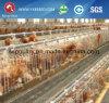 jaula del pollo de la jaula de batería de 90/120 capas del pollo