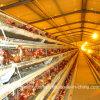 Layer automático Chicken Farm Equipment com GV Certification