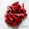 Pepe rossi secchi caldi dei peperoncini rossi del richiamo