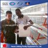 아프리카 판매를 위한 자동적인 닭 감금소 장비에 있는 사용된 가금 건전지 감금소 장비