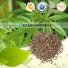Естественное и более высокое семя пеньки содержания масла