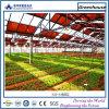 Gemüsegewächshaus mit transparenten Dünnfilm-Baugruppeen