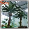 Rifornimento Palmtree di plastica artificiale esterno decorativo della Cina