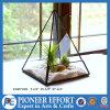 屋内プラントホールダーのためのピラミッドの整形ガラス陸生動物飼育器