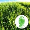 Chlorophyll-Puder
