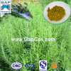 Carnosic Acid con Free Sample