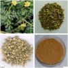 Natürlicher Saponine40%-90% Tribulus Terrestris Auszug