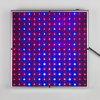 Il nuovo quadrato 14W LED coltiva l'indicatore luminoso completo chiaro della lampada dell'azzurro LED di spettro 225 per la lattuga delle verdure
