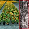 Tissu tissé de jardinage de lutte contre les mauvaises herbes de bâche de serre chaude