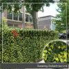 옥외 인공적인 회양목 프라이버시 산울타리