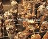 Cogumelo de Shiitake liso secado Brown saudável do alimento de Hubei Yongxing