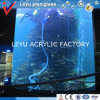 Grande tanque de peixes acrílico do cilindro em uns aquários do oceano