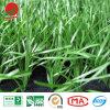 Трава самого лучшего футбольного поля качества Анти--UV искусственная