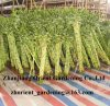 Спиральн Lucky Bamboo 30cm-90cm Dracaena Sanderiana Bamboo Bonsai крытое Ornamental Water Aquatic Plants