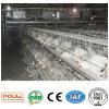 Sistema automático del equipo de la jaula del pollo de la parrilla