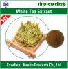 Polyphénols blancs normaux de l'extrait 30%-95% de thé de 100%