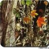 Camouflage van de Breedte van Tsautop de In het groot 0.5m/1m en Film Tsmh12514 van de Film van de Druk van de Overdracht van het Water van de Film van de Boom de Hydrografische Hydro Onderdompelende