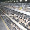 Ferme avicole Little Chicken Cage (galvanisation)