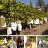 高品質電流を通されたワイヤーが付いている白いすべて木パルプの微小孔のペーパーフルーツのブドウのペーパー成長する保護袋
