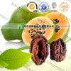 صاحب مصنع إمداد تموين عضويّة عشب الطبّ [كمّن] [فلوورينغقوينس] ثمرة