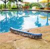 Pinceaux pour piscine Algae Brosse à piscine en inox et en nylon