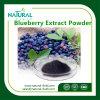 HPLC著ヘルスケアの製品のブルーベリーのエキスAnthocyanidins10%-25%のブルーベリーのエキスの粉