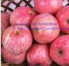 Nueva cosecha FUJI Apple del origen de calidad superior de Yantai
