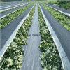 紫外線のPP雑草防除のマット