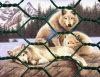動物によって保護される六角形の金網