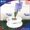 Étalage acrylique personnalisé de fleur de modèle