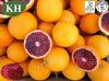 Antocianidinas naturales del extracto el 5% de la naranja de sangre del 100%